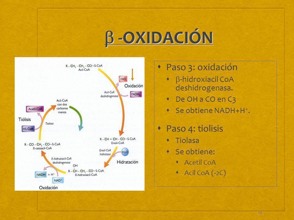 b -OXIDACIÓN Paso 3: oxidación Paso 4: tiolisis