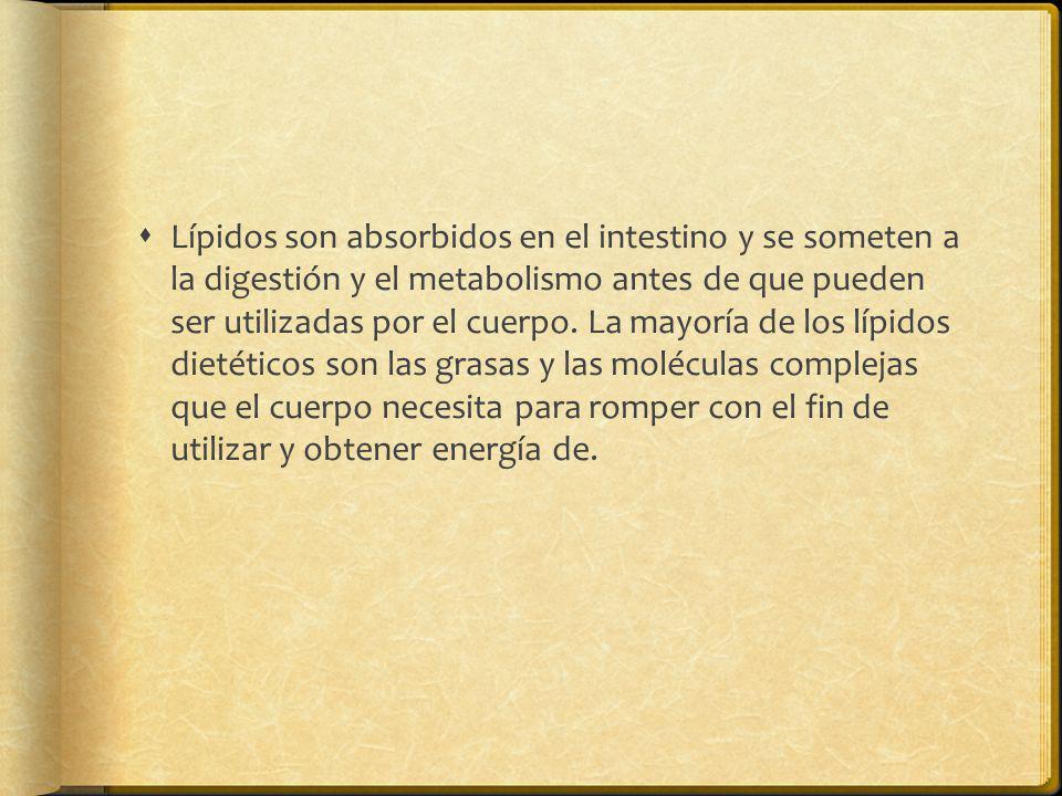 Lípidos son absorbidos en el intestino y se someten a la digestión y el metabolismo antes de que pueden ser utilizadas por el cuerpo.