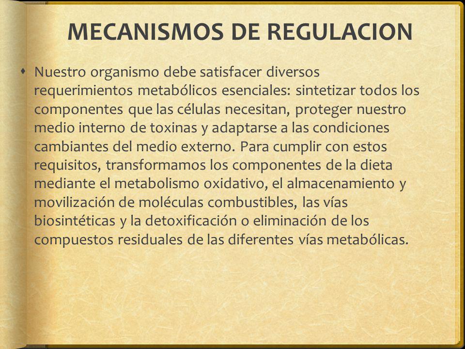 MECANISMOS DE REGULACION