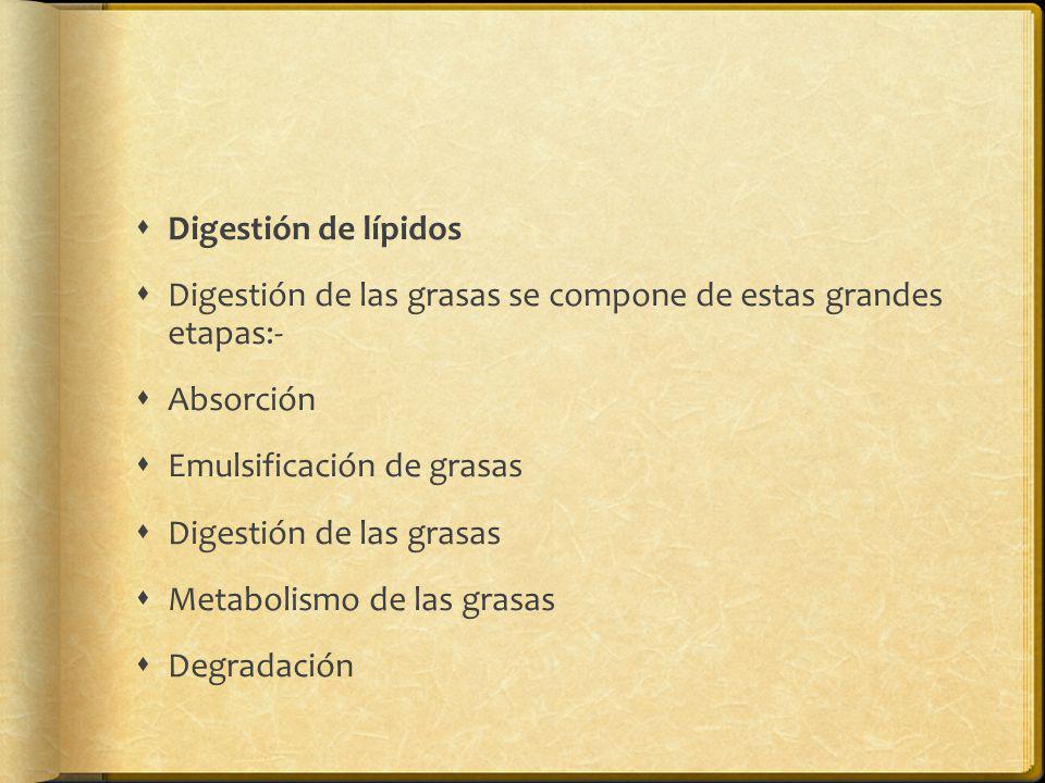Digestión de lípidos Digestión de las grasas se compone de estas grandes etapas:- Absorción. Emulsificación de grasas.