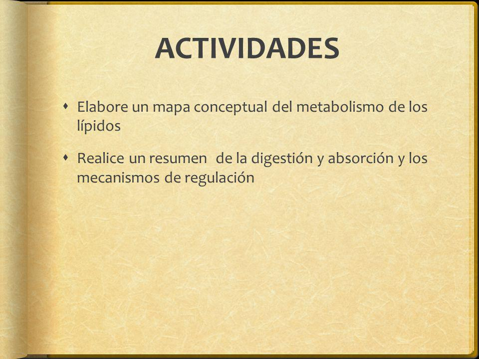 ACTIVIDADES Elabore un mapa conceptual del metabolismo de los lípidos
