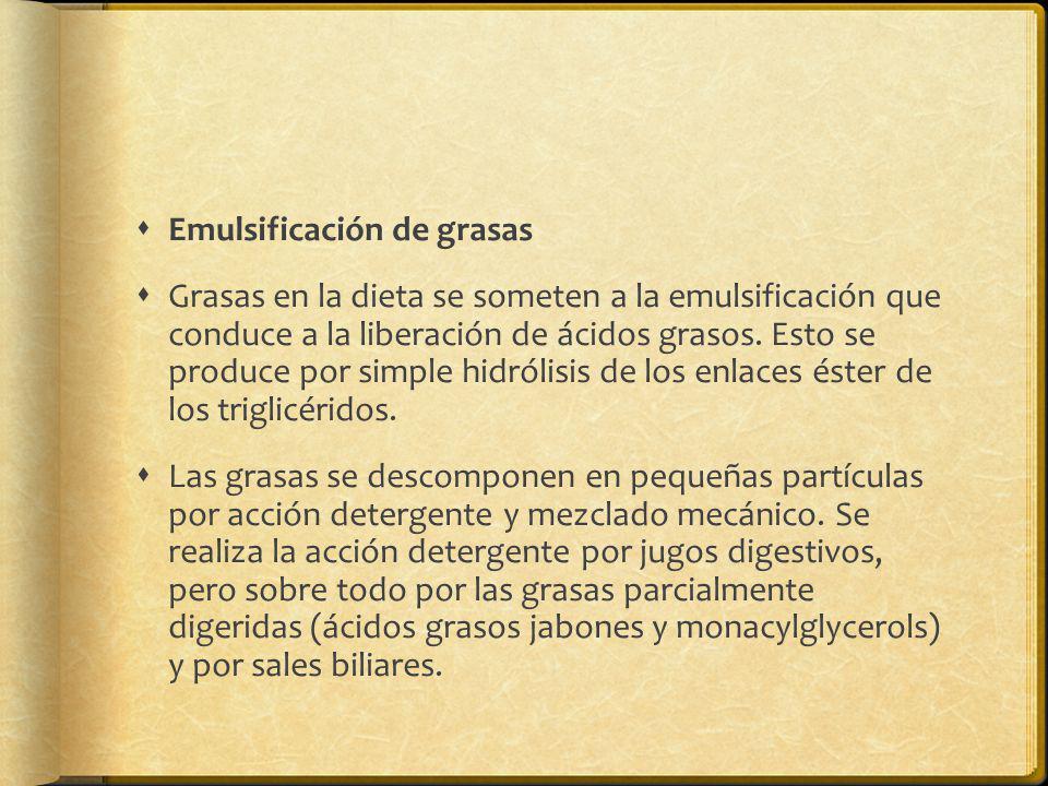 Emulsificación de grasas