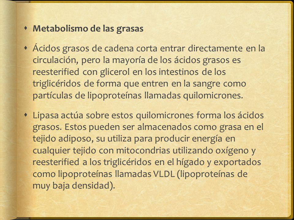 Metabolismo de las grasas