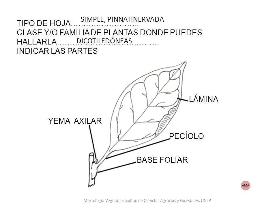 Morfología Vegetal, Facultad de Ciencias Agrarias y Forestales, UNLP
