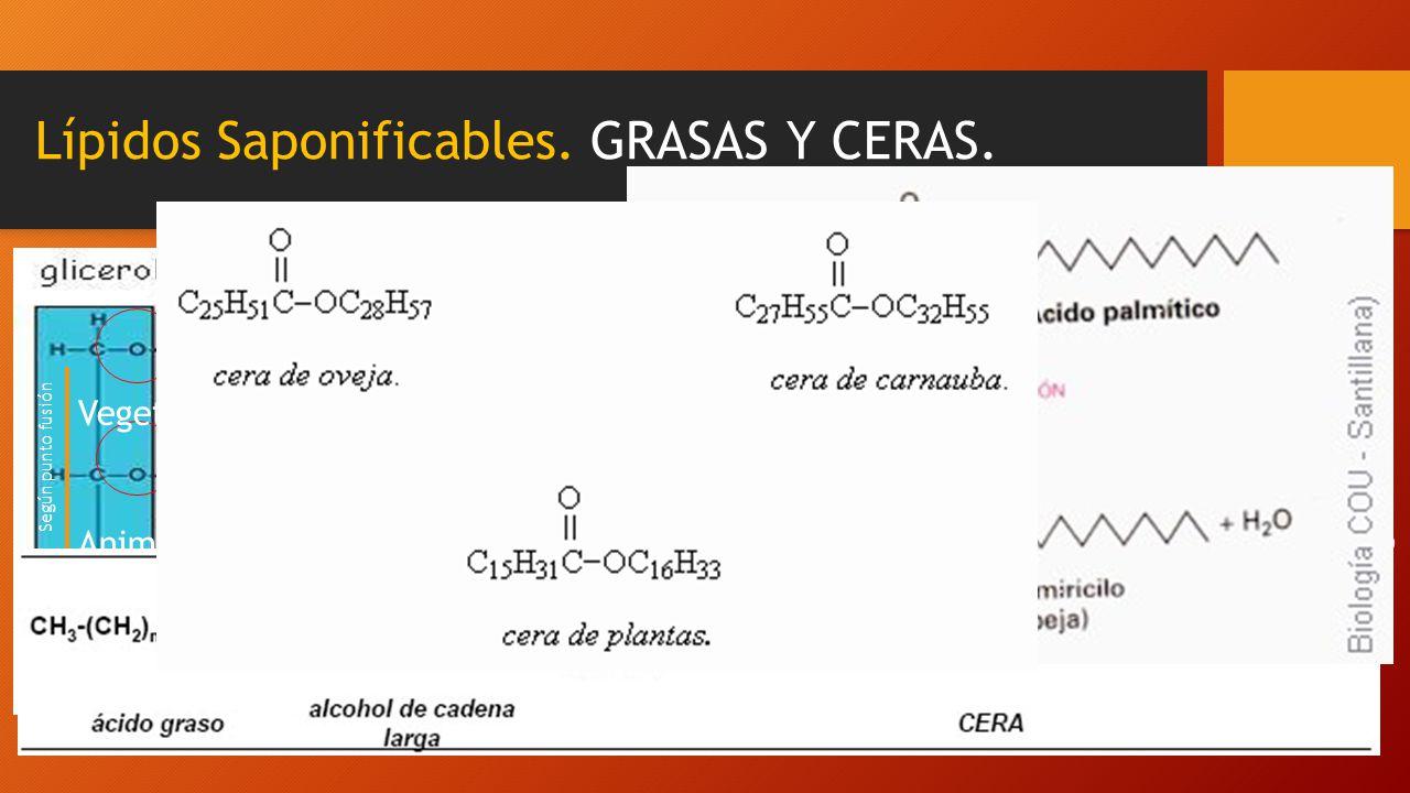 Lípidos Saponificables. GRASAS Y CERAS.