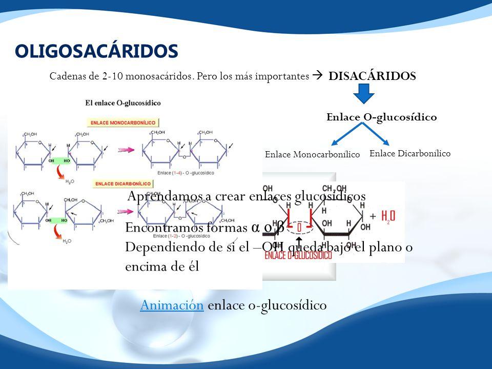 OLIGOSACÁRIDOS Aprendamos a crear enlaces glucosídicos