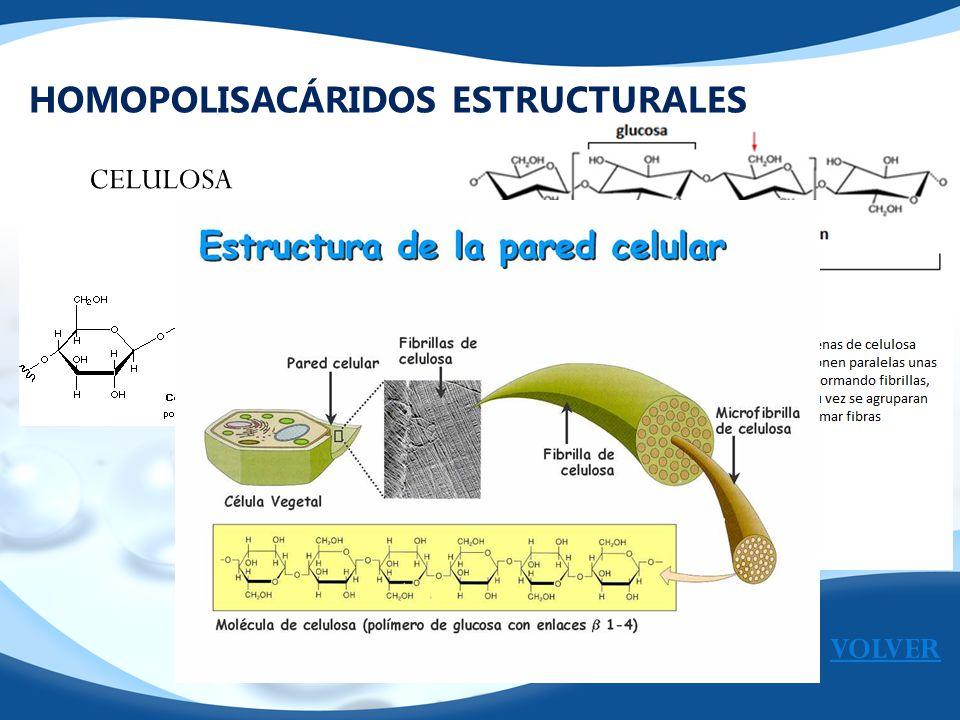 HOMOPOLISACÁRIDOS ESTRUCTURALES