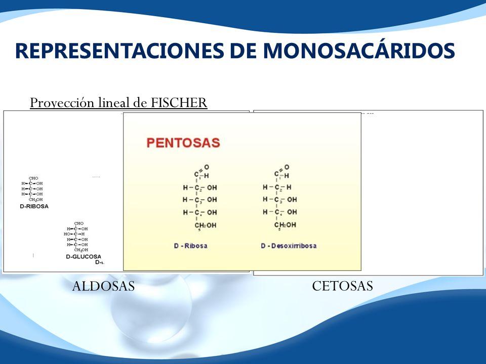 REPRESENTACIONES DE MONOSACÁRIDOS