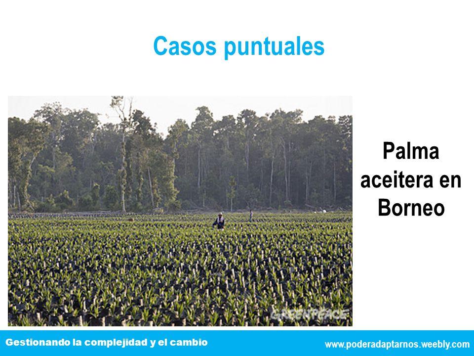 Palma aceitera en Borneo