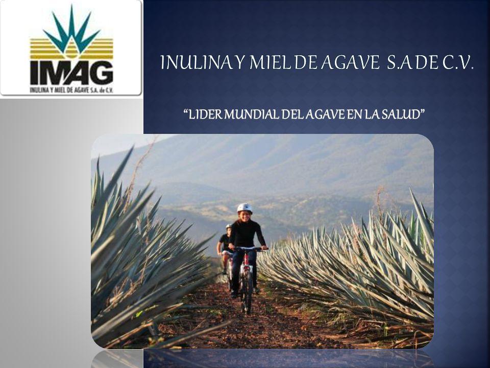 INULINA Y MIEL DE AGAVE S.A DE C.V.