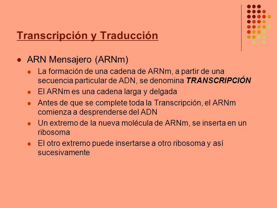 Transcripción y Traducción