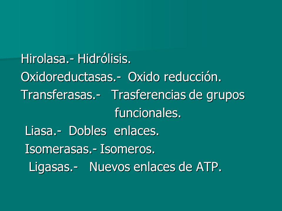 Hirolasa.- Hidrólisis. Oxidoreductasas.- Oxido reducción. Transferasas.- Trasferencias de grupos.