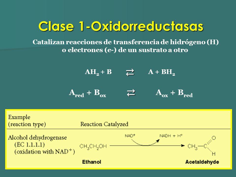 Clase 1-Oxidorreductasas