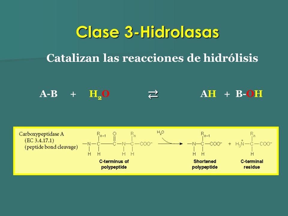Catalizan las reacciones de hidrólisis