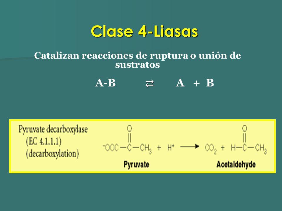 Catalizan reacciones de ruptura o unión de sustratos