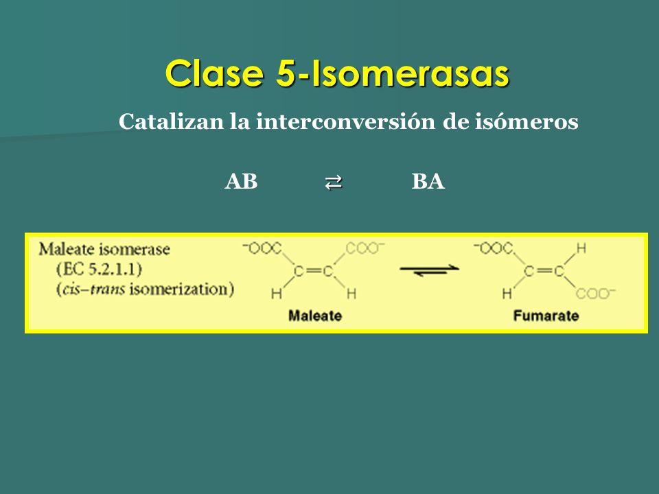 Catalizan la interconversión de isómeros