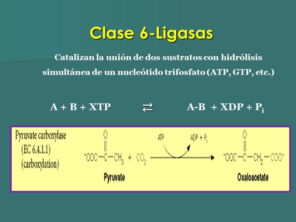 Clase 6-Ligasas ⇄ A + B + XTP A-B + XDP + Pi