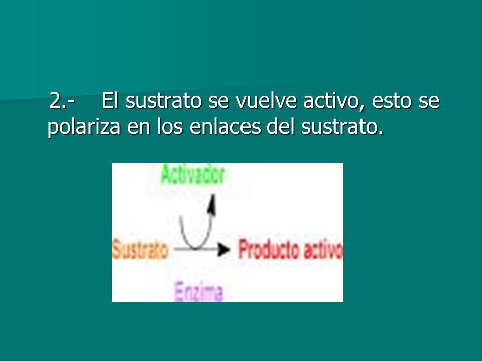 2.- El sustrato se vuelve activo, esto se polariza en los enlaces del sustrato.