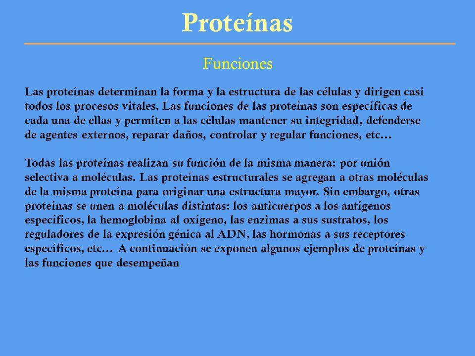 Proteínas Funciones.