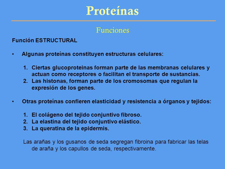 Proteínas Funciones Función ESTRUCTURAL