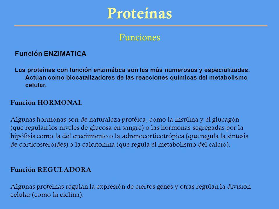 Proteínas Funciones Función ENZIMATICA Función HORMONAL