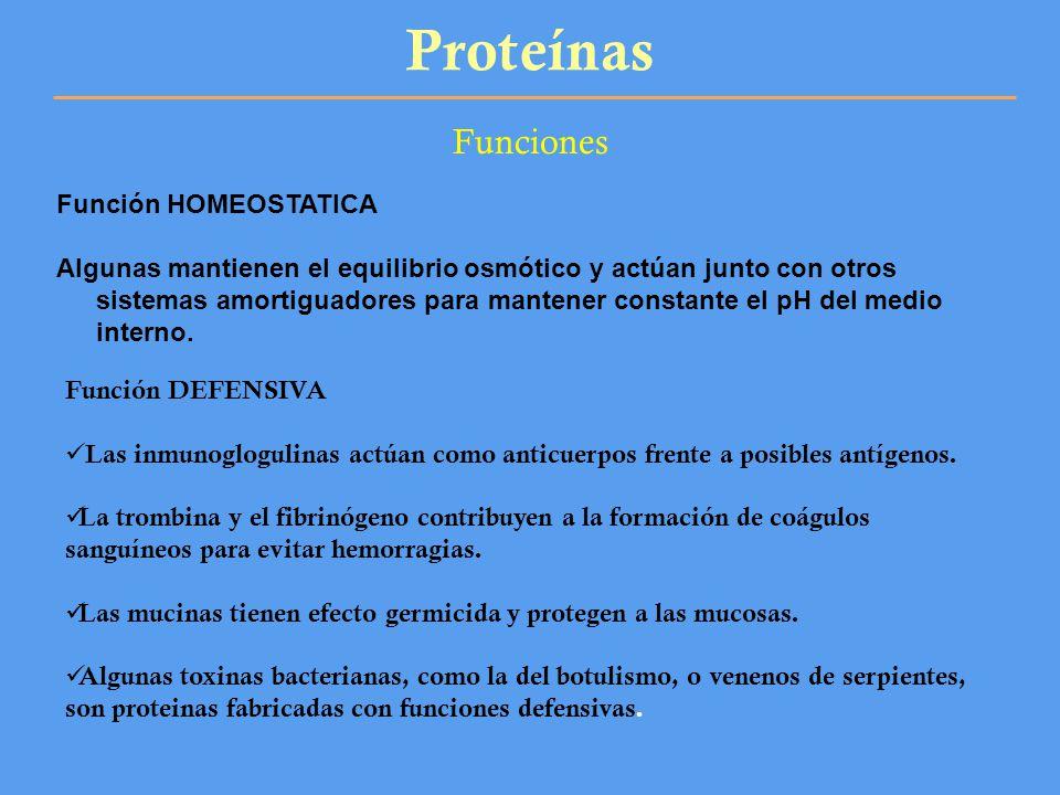 Proteínas Funciones Función HOMEOSTATICA