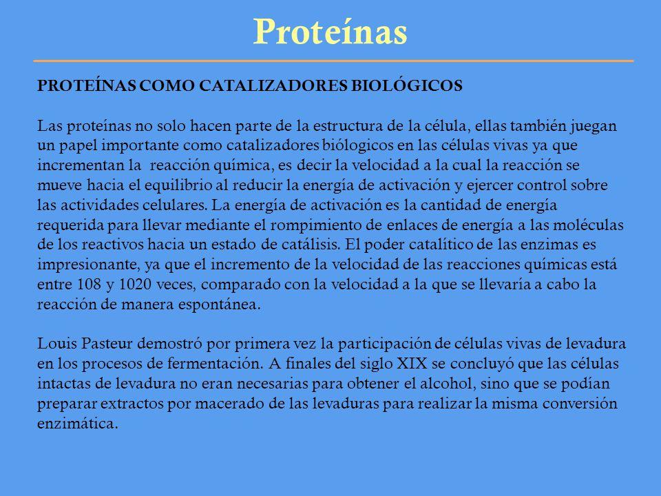 Proteínas PROTEÍNAS COMO CATALIZADORES BIOLÓGICOS