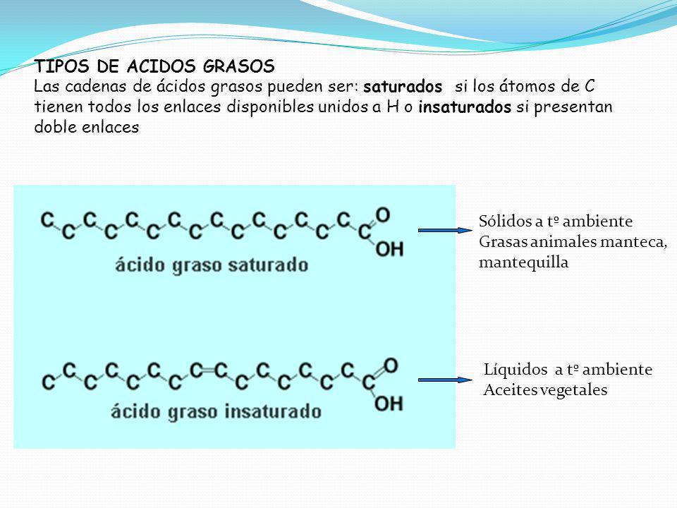 TIPOS DE ACIDOS GRASOS Las cadenas de ácidos grasos pueden ser: saturados si los átomos de C tienen todos los enlaces disponibles unidos a H o insaturados si presentan doble enlaces