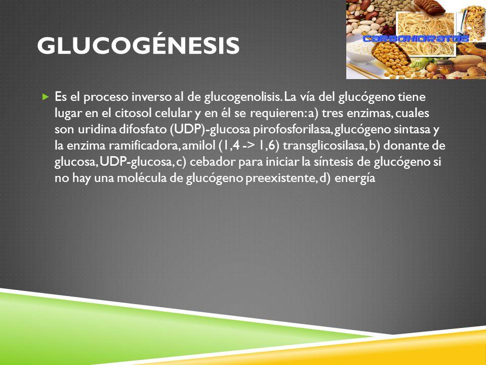 Glucogénesis