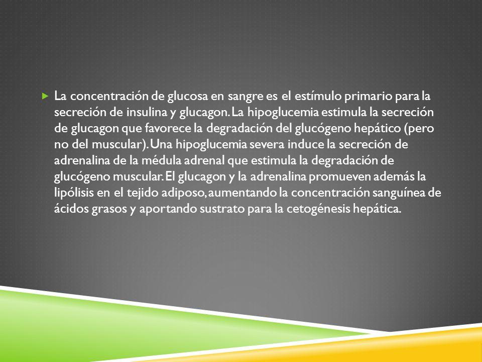 La concentración de glucosa en sangre es el estímulo primario para la secreción de insulina y glucagon.