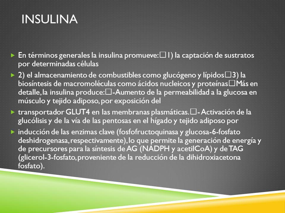 Insulina En términos generales la insulina promueve: 1) la captación de sustratos por determinadas células.