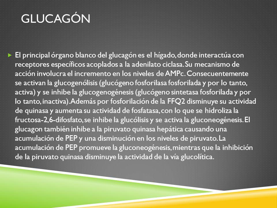 Glucagón
