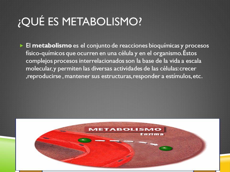 ¿Qué es Metabolismo