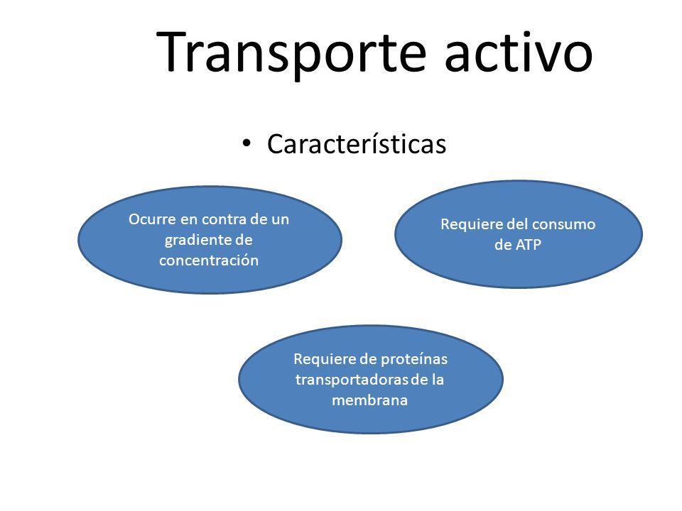 Transporte activo Características Requiere del consumo de ATP