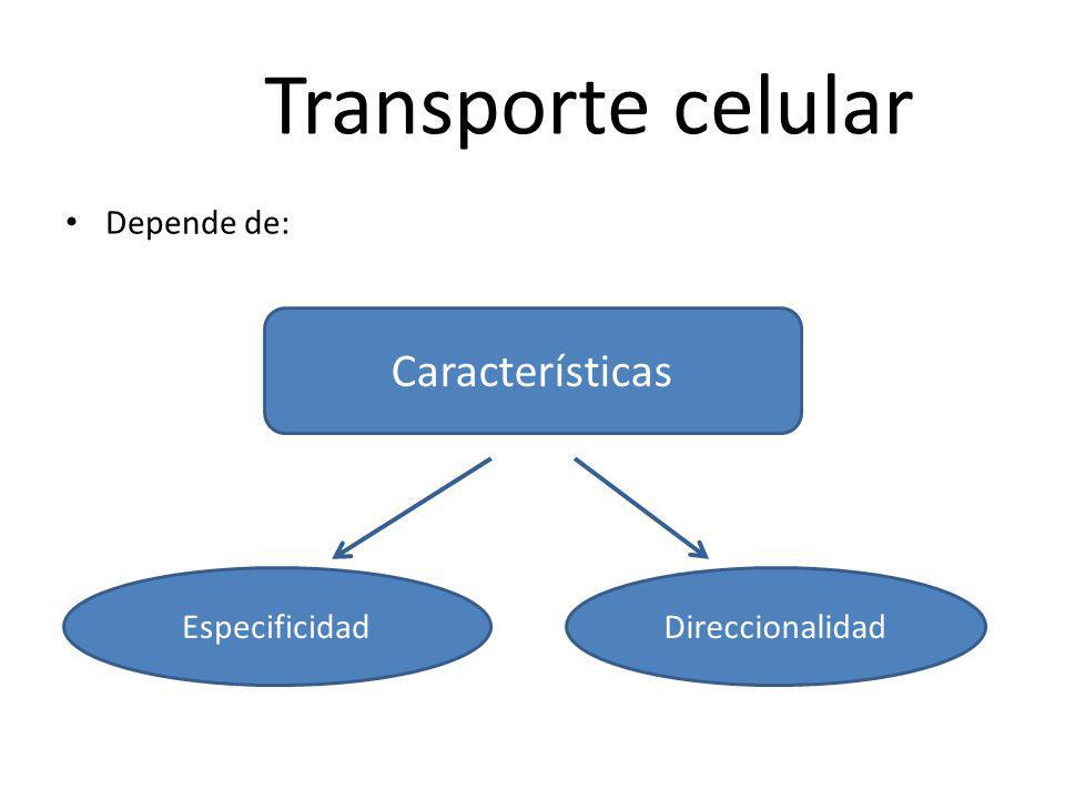 Transporte celular Características Depende de: Especificidad