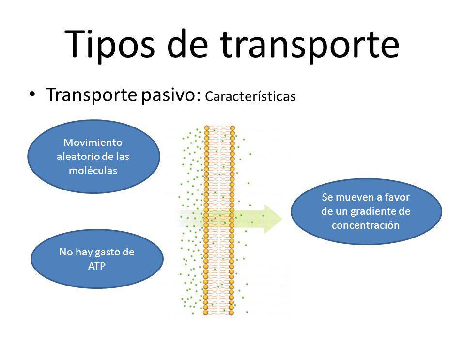 Tipos de transporte Transporte pasivo: Características