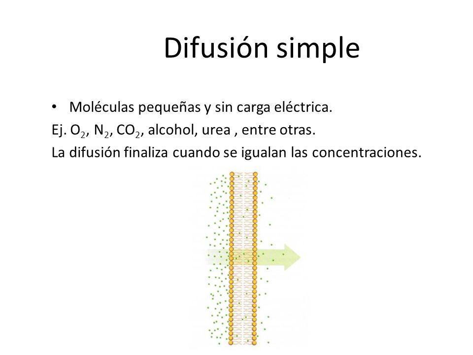 Difusión simple Moléculas pequeñas y sin carga eléctrica.