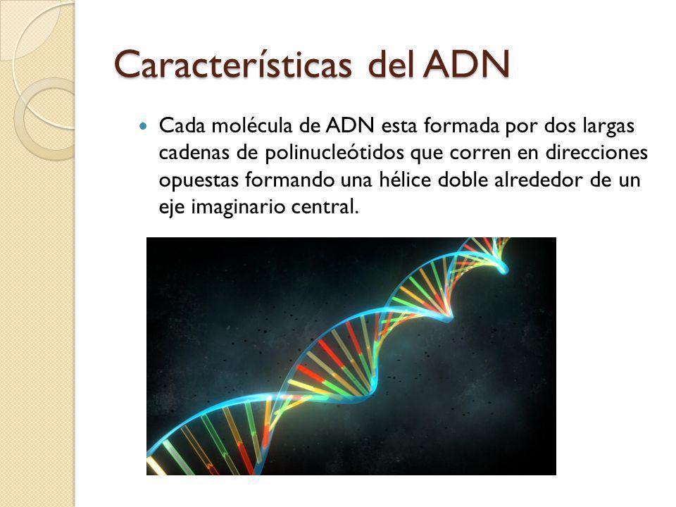 Características del ADN