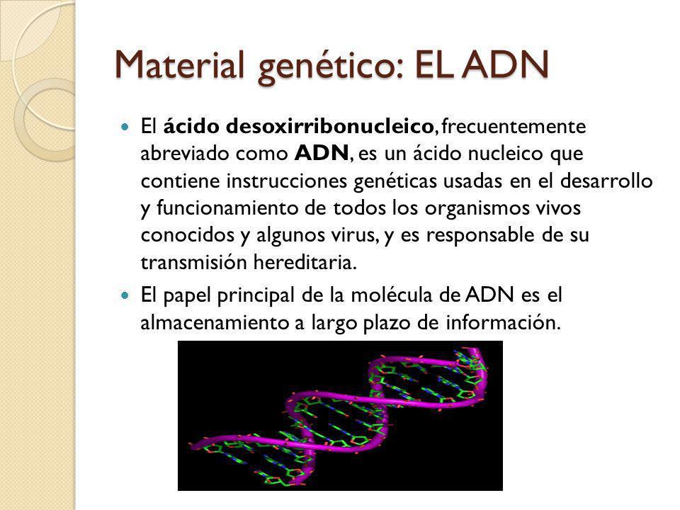 Material genético: EL ADN