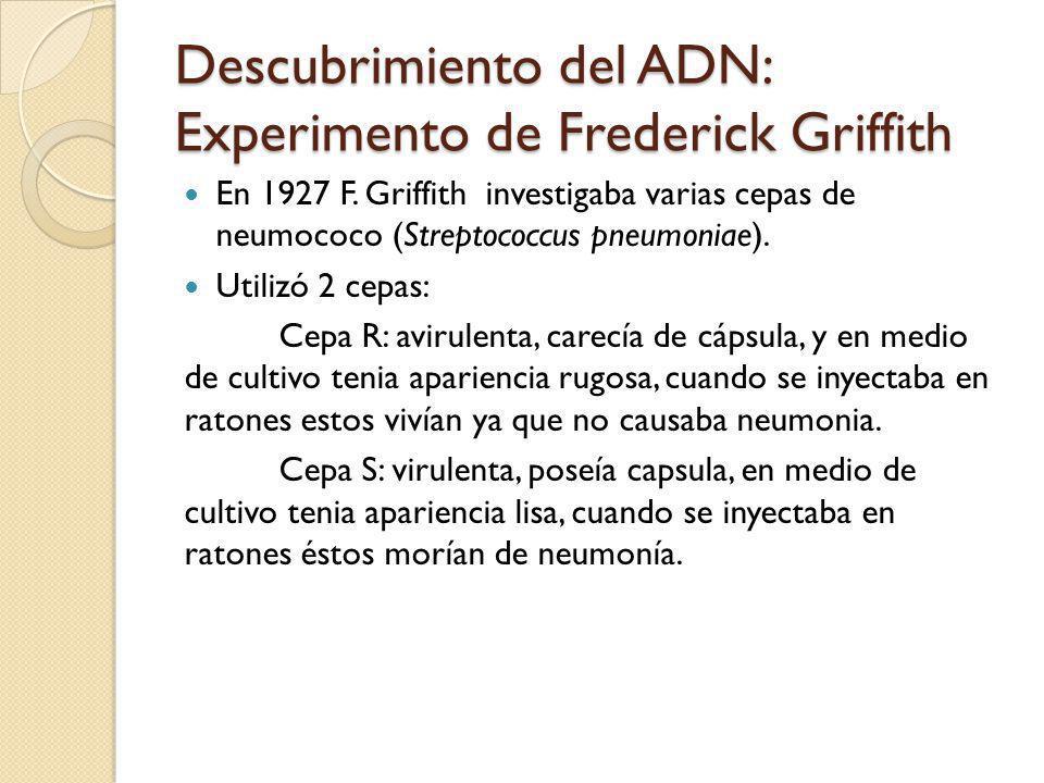 Descubrimiento del ADN: Experimento de Frederick Griffith