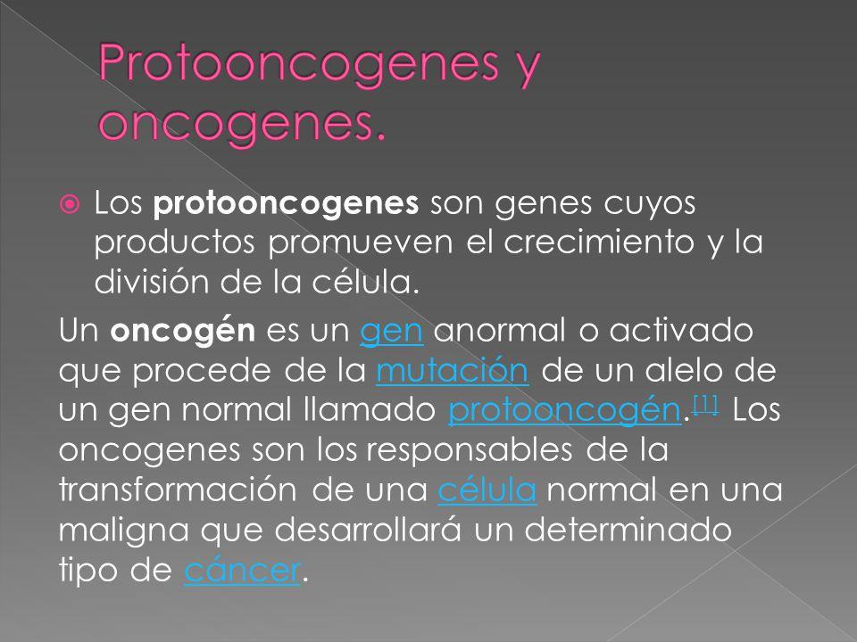 Protooncogenes y oncogenes.