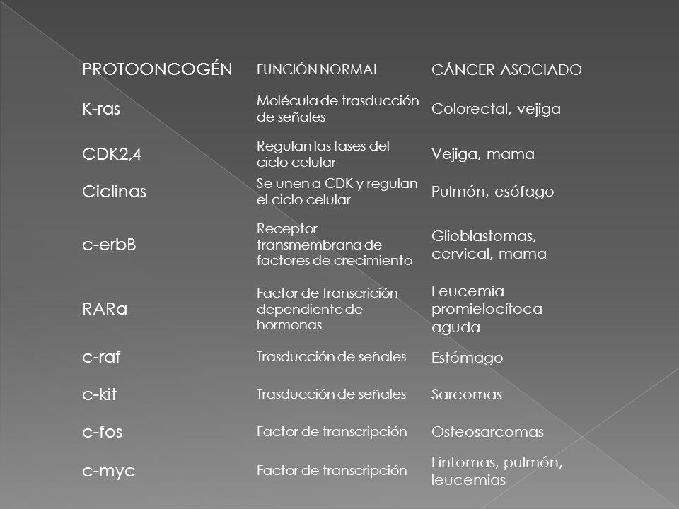PROTOONCOGÉN K-ras CDK2,4 Ciclinas c-erbB RARα c-raf c-kit c-fos c-myc