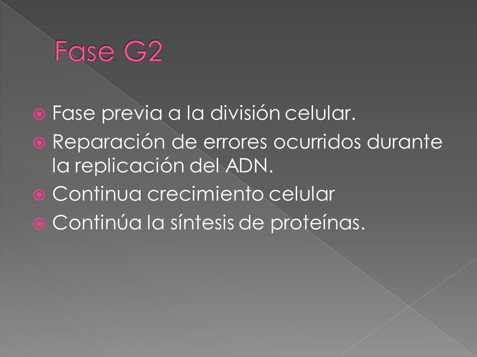 Fase G2 Fase previa a la división celular.