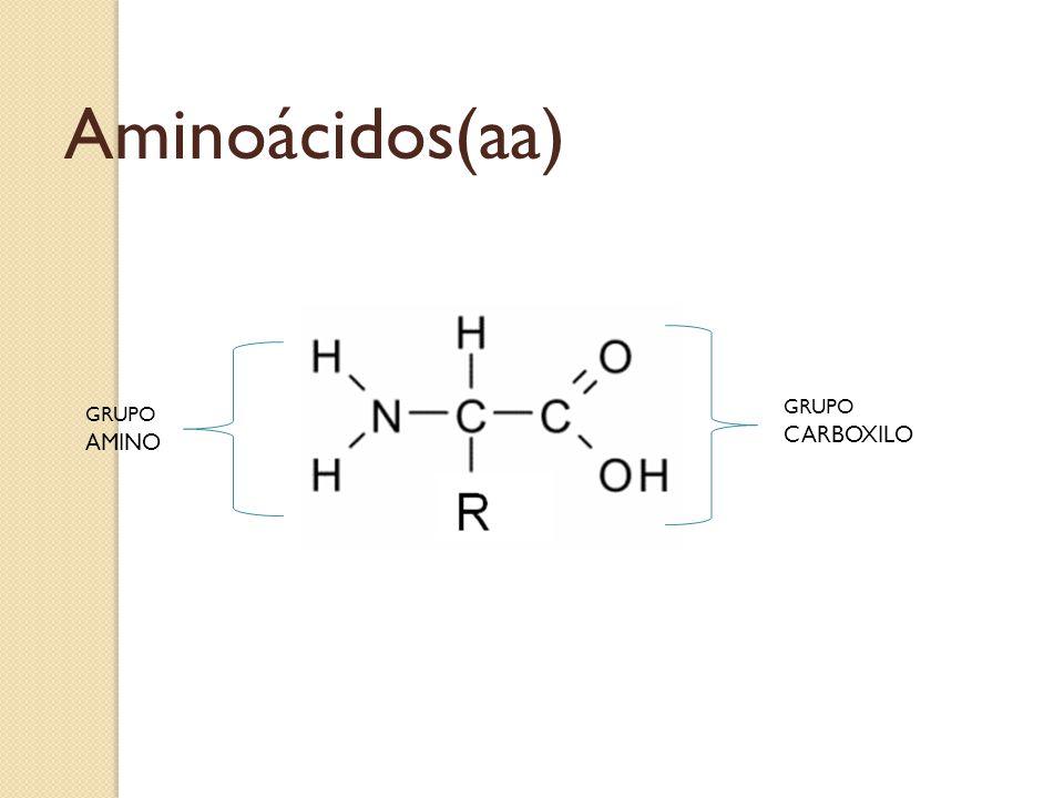 Aminoácidos(aa) GRUPO CARBOXILO GRUPO AMINO