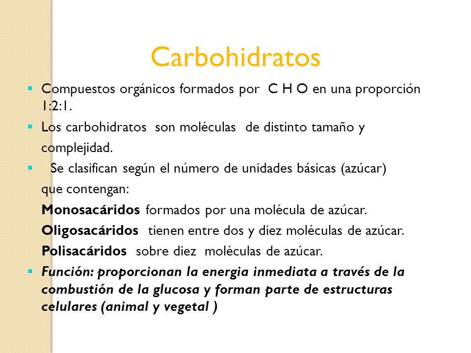Carbohidratos Compuestos orgánicos formados por C H O en una proporción 1:2:1. Los carbohidratos son moléculas de distinto tamaño y.