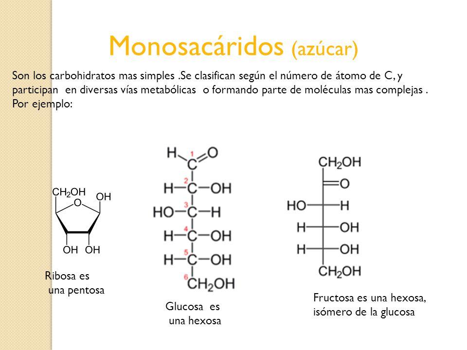 Monosacáridos (azúcar)
