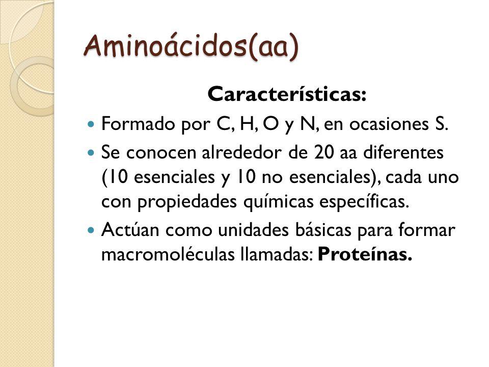 Aminoácidos(aa) Características: