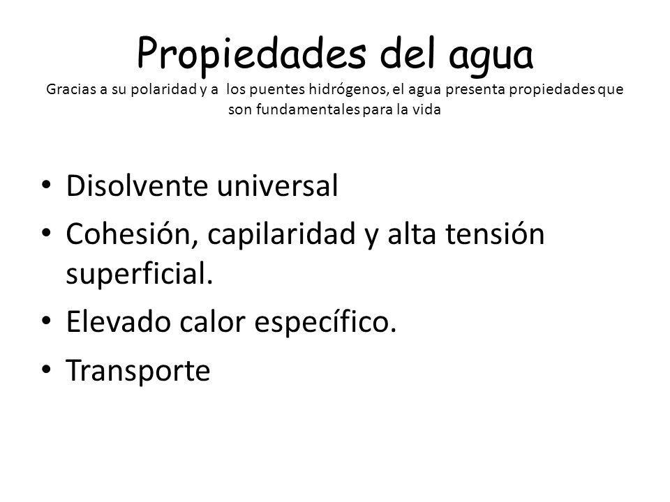 Propiedades del agua Gracias a su polaridad y a los puentes hidrógenos, el agua presenta propiedades que son fundamentales para la vida