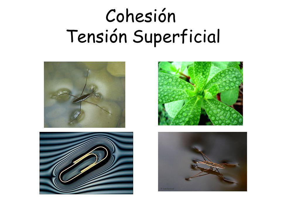 Cohesión Tensión Superficial