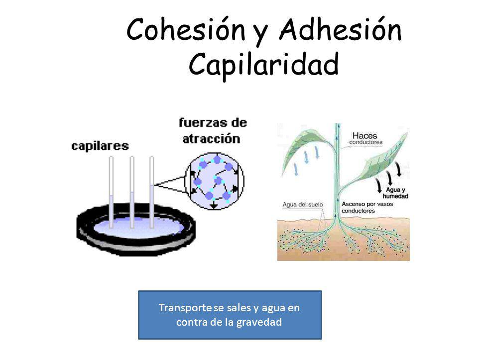 Cohesión y Adhesión Capilaridad